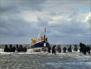 paarden reddingsboot 345535
